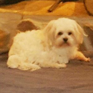 Lori's dog Milo