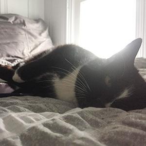 Marissa's cat Remy